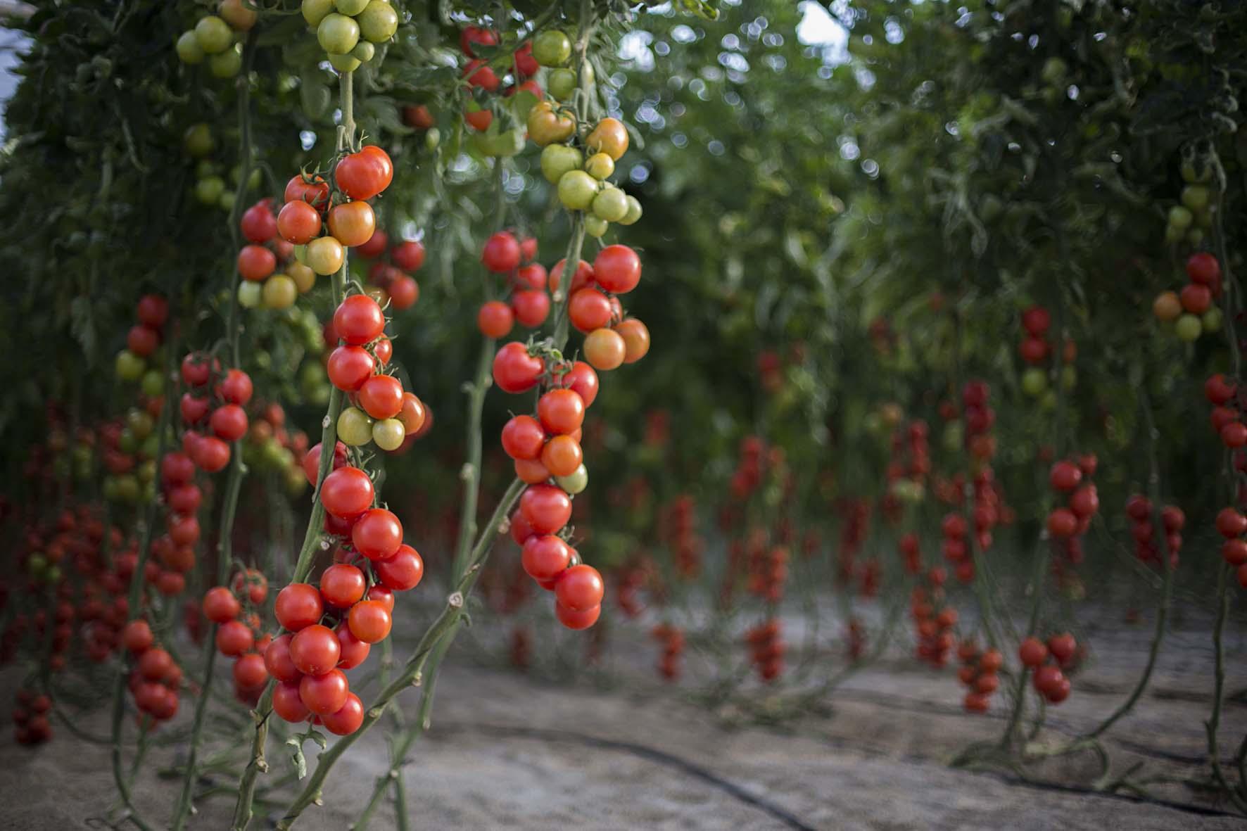 La UAL pone en valor académico internacional el Modelo Almería de cultivos