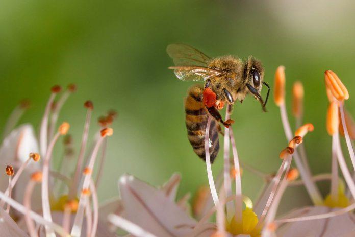 La UAL idea un nuevo sistema de biomonitorizacion utilizando las abejas como 'centinelas' de la contaminación ambiental