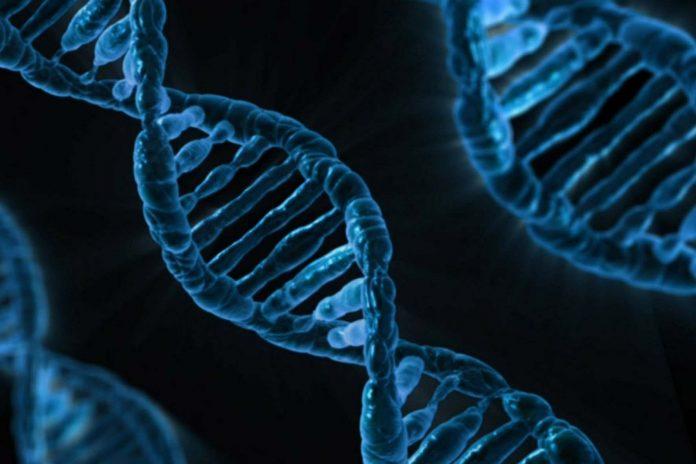 La UAL colabora con Cambridge en la identificación del origen genético del 'déficit de control de impulsos'