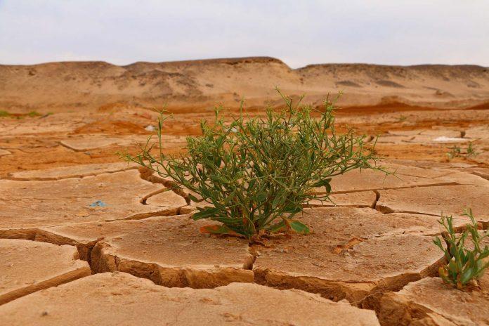 UAL y Complutense guían sobre la ubicación y el diseño de las áreas naturales protegidas ante el cambio climático