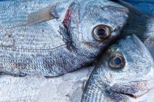 La UAL determina en casi un 300% el aumento de peso en las doradas de acuicultura alimentadas con insectos