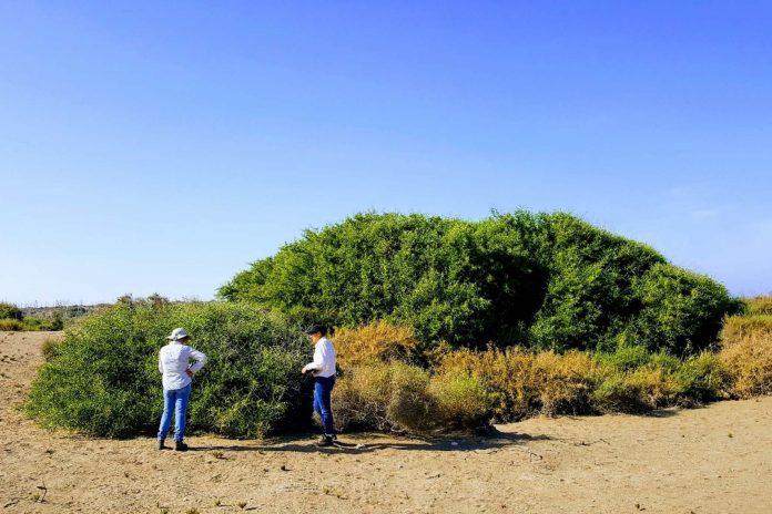 La UAL participa en una investigación sobre el cambio climático y la biodiversidad de los ecosistemas áridos