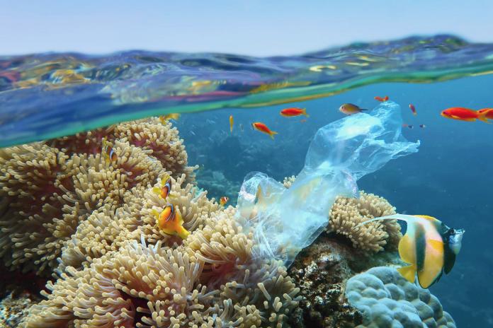 Un estudio de la UAL incide en el gran problema de la presencia de plástico en fauna marina