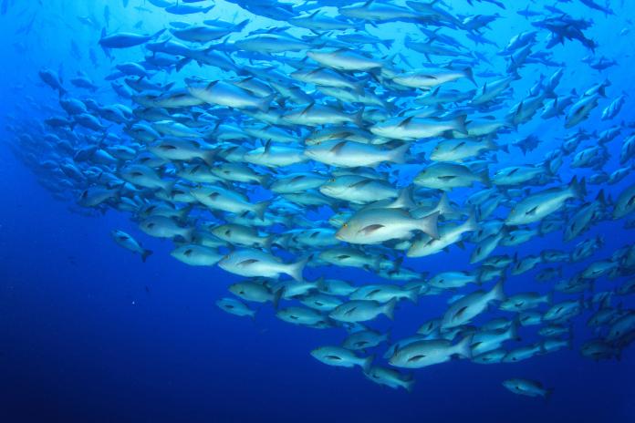 Un investigador CEIMAR de la UAL, entre los 26 primeros en el listado del índice h en investigación acuícola en España
