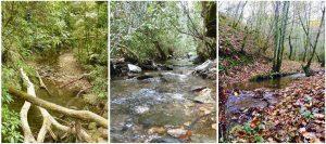 La UAL suma a un estudio internacional pionero sobre las consecuencias de las actuaciones forestales, en particular en los bosques tropicales